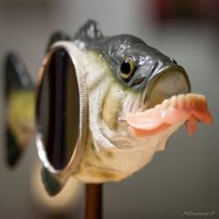 Saskia_Vergunst_Art_Orthodonfish
